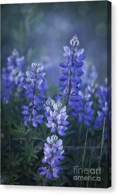 Yukon Canvas Print - Summer Dream by Priska Wettstein
