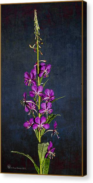 Summer Fireweed Canvas Print