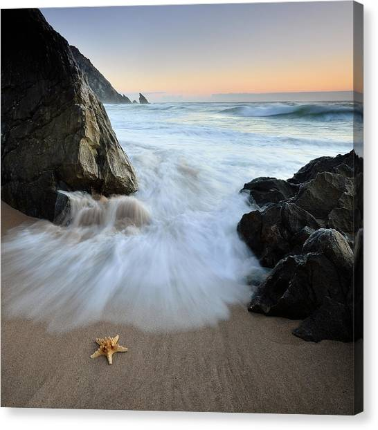 Starfish Canvas Print - Summer Flux by Paulo Dias