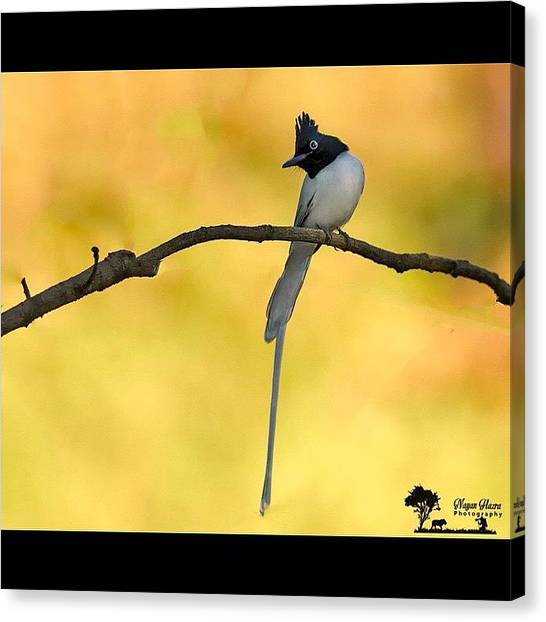 Flycatchers Canvas Print - Summer Gave To Rains, Dryness To by Nayan Hazra