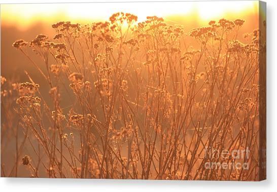 Summer Glow Canvas Print