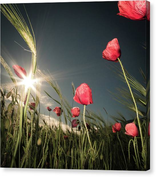 Romantic Flower Canvas Print - Summer Is Here by Petra Dvorak
