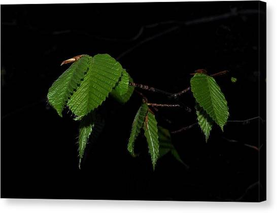 Summer Leaves On Black Canvas Print