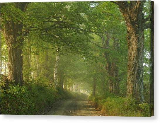 Summer Morning, Cory Hill Road Canvas Print