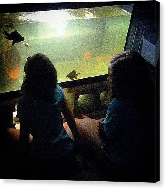 Koi Canvas Print - ..::summer Nights::.. - #goldfishunion by Joseph Brown