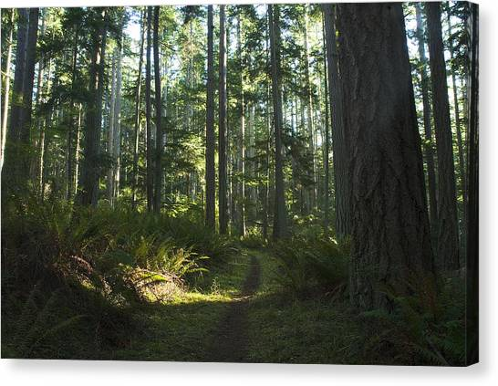 Summer Pacific Northwest Forest Canvas Print