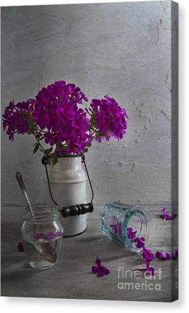 Phlox Canvas Print - Summer Phlox by Elena Nosyreva