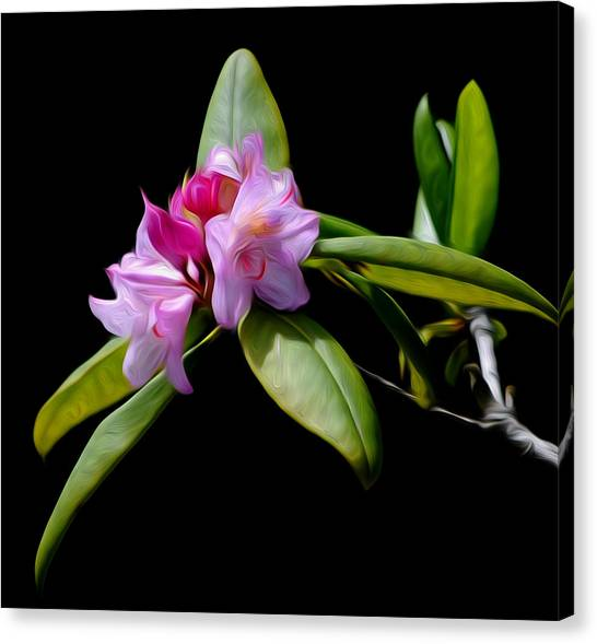 Summer Rhododendron Canvas Print