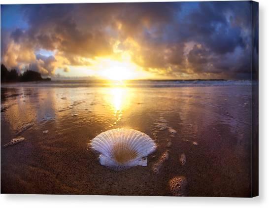 Clams Canvas Print - Summer Solstice by Sean Davey