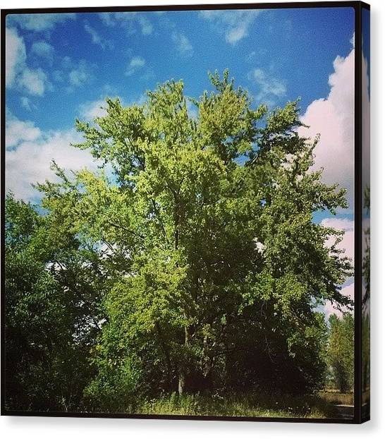 South Dakota Canvas Print - Summer Time by Jesse Peterson