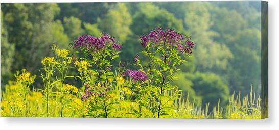 Ohio Valley Canvas Print - Summer Weeds, Cuyahoga Valley National by Panoramic Images
