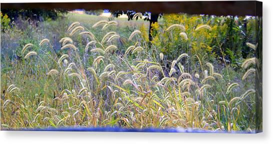 Summer Wheat Canvas Print