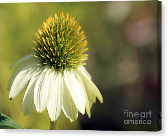 Summer White Canvas Print