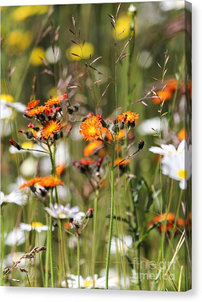Summer Wildflowers Canvas Print