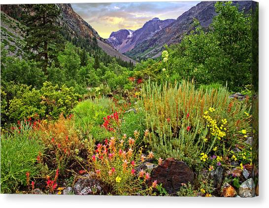 Summer Wildflowers In Lundy Canyon Canvas Print