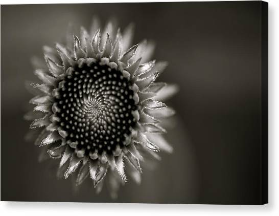 Canvas Print featuring the photograph Summer's Promise by Kristi Swift