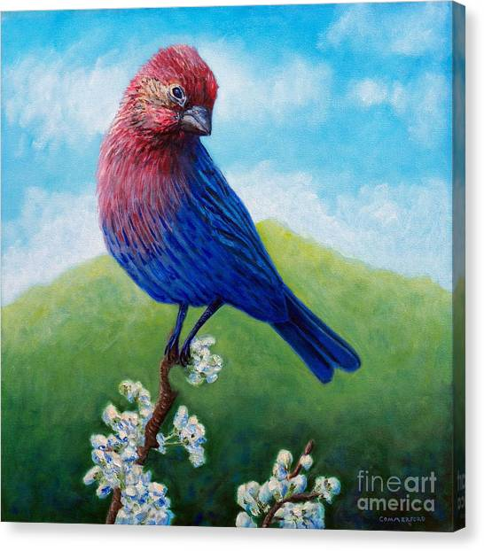 Finches Canvas Print - Summertime by Brian  Commerford