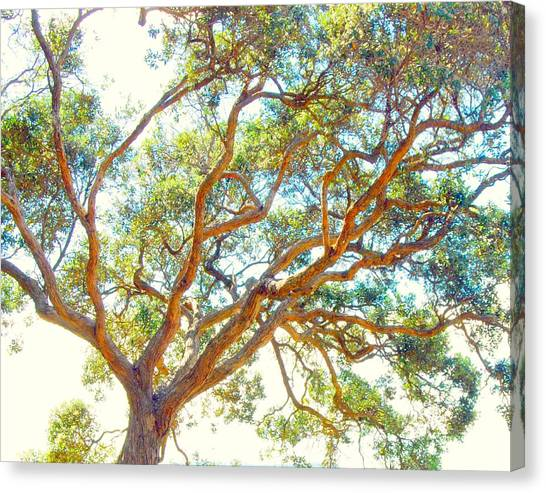 Canvas Print featuring the photograph Summertime Tree by Jocelyn Friis