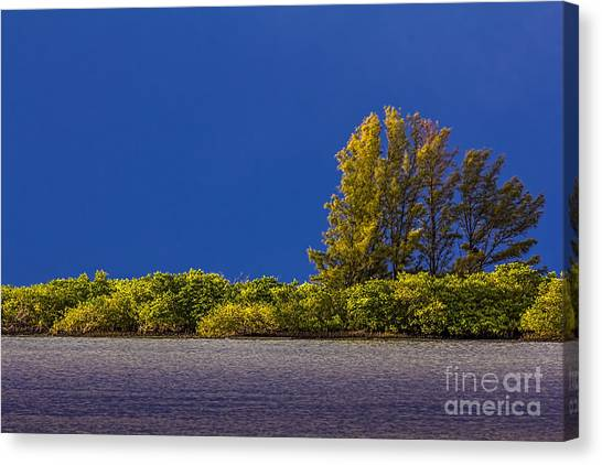 Mangrove Trees Canvas Print - Sun Bathed by Marvin Spates