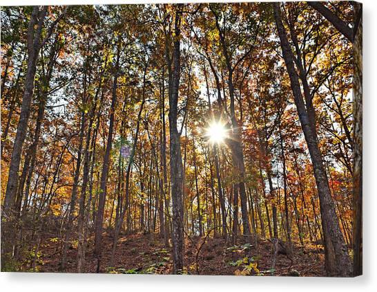 Sun Beams Dance In Autumn Trees Canvas Print