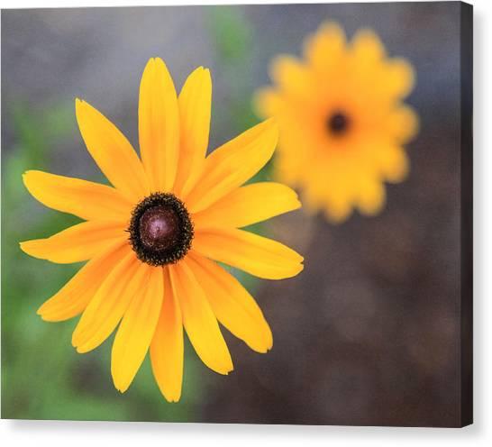 Sun Daisy Canvas Print