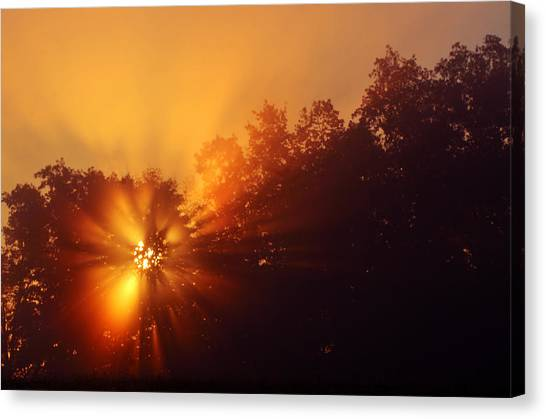 Sun Fog Trees-1 Canvas Print
