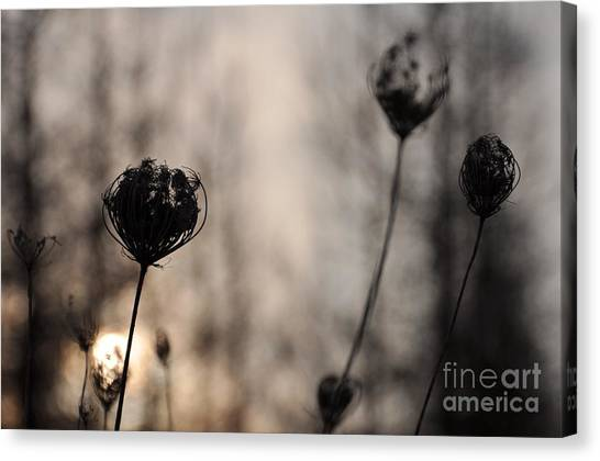 Sun In Darkness Canvas Print
