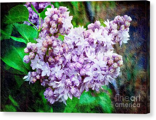 Lilac Bush Canvas Print - Sun Lit Lilac The Sweet Sign Of Spring by Andee Design