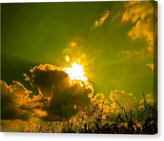 Sun Nest Canvas Print