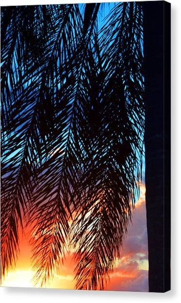 Palm Trees Sunsets Canvas Print - Sun Palm by Laura Fasulo