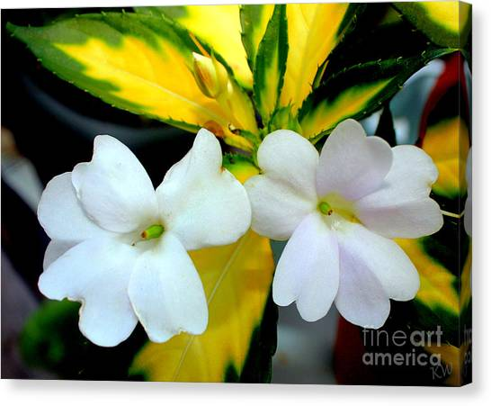 Sun Patiens Spreading White Variagated Canvas Print