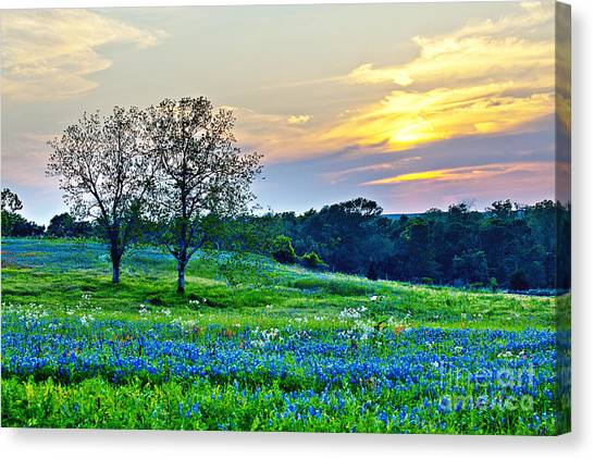 Prairie Sunsets Canvas Print - Sun Setting On Another Texas Day by Katya Horner