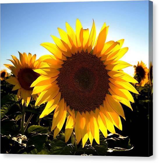 Sun Shine 3 Wc 2  Canvas Print