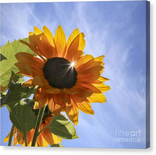 Sun Sparkle Canvas Print