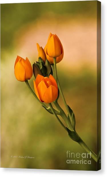 Sun Star Flower Canvas Print