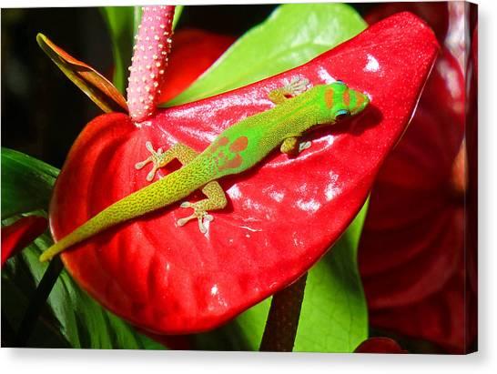 Sunbathing Gecko Canvas Print