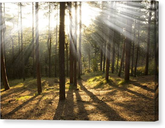 Sunbeams Through The Trees Canvas Print by Paul Madden