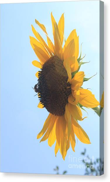 Canvas Print - Sunbee by Lotus