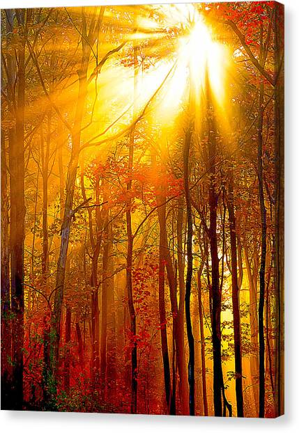 Sunburst In The Forest Canvas Print