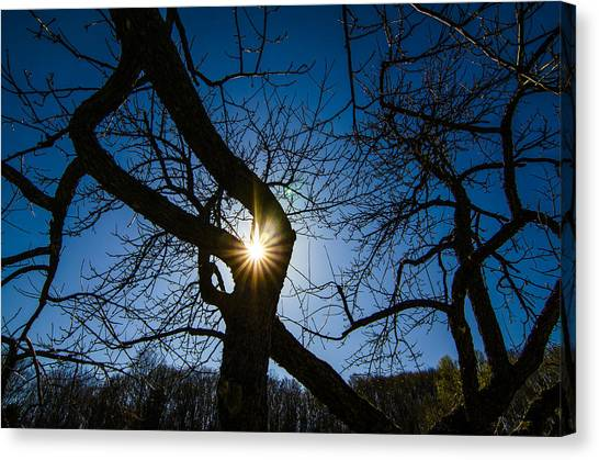 Sunburst In The Orchard Canvas Print