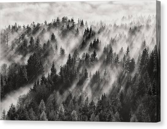 Fir Trees Canvas Print - Sundance No.1 by Davorin Baloh