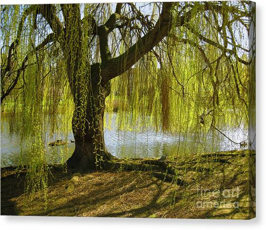 Weeping Willows Canvas Print - Sunday In The Park by Madeline Ellis
