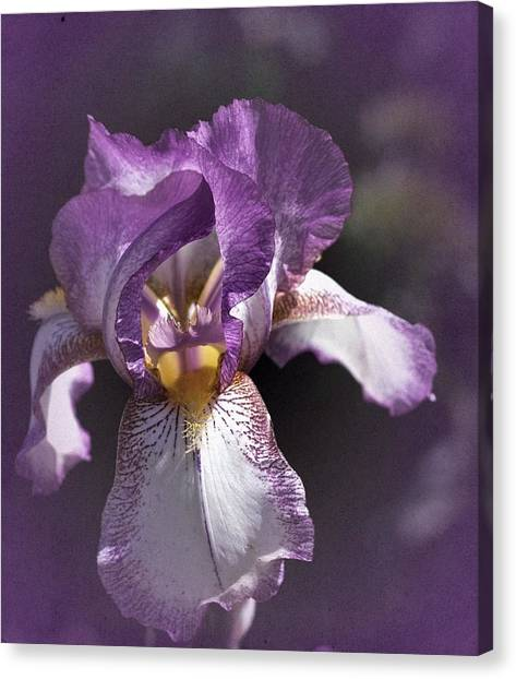 Sunday Iris No. 1 Canvas Print