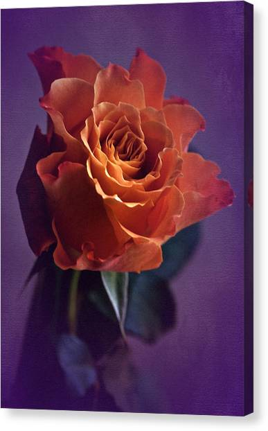 Sunday Rose  Canvas Print