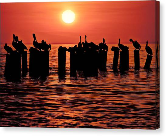 Sundown With Pelicans Canvas Print