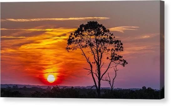 Sundown With Tree Canvas Print