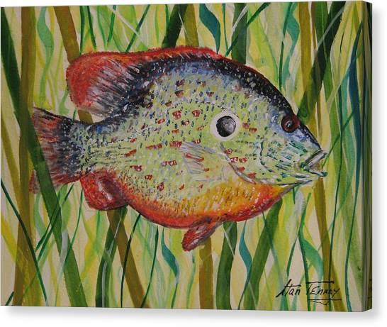 Sunfish Canvas Print