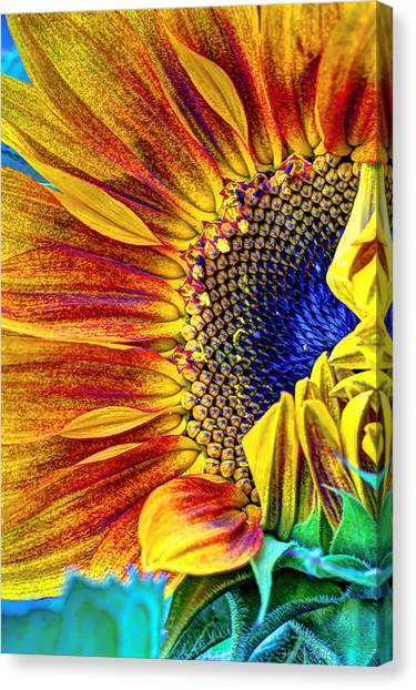 Sunflower Seeds Canvas Print - Sunflower Abstract by Heidi Smith