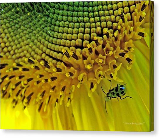 Sunflower And Beetle Canvas Print