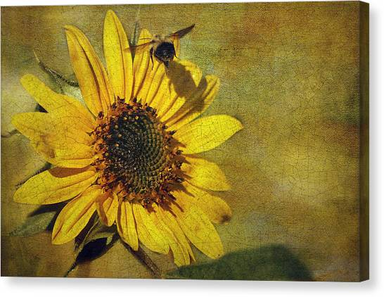 Sunflower And Bumble Bee Canvas Print